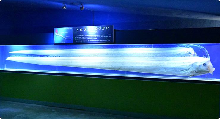 東海大学海洋科学博物館 , 東海大学海洋学部博物館